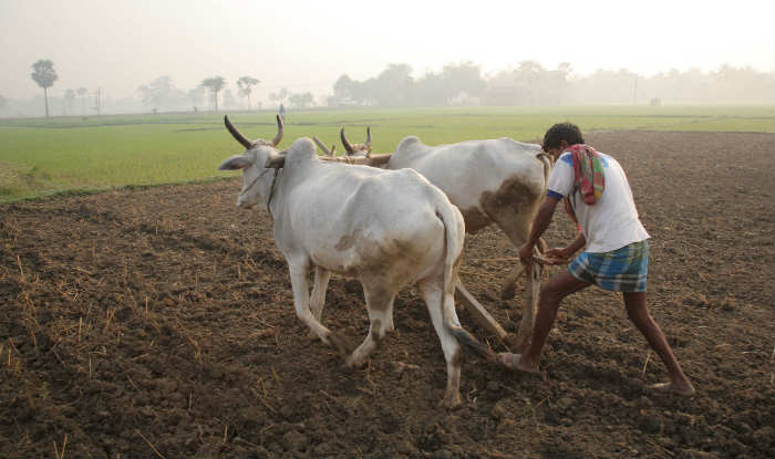 agriculture ncert class 10 chapter 4
